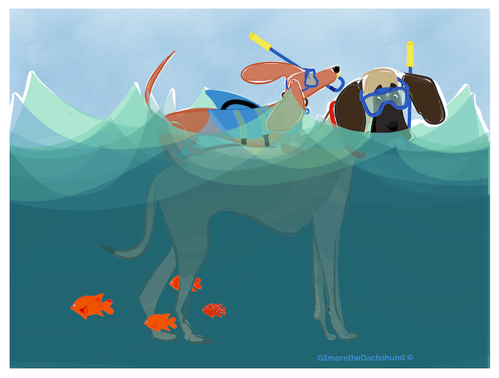 Illustration of a dachshund swimming in the ocean with a bigger dog by Gilmore the Dachshund