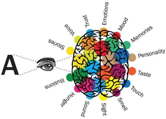 Brain reacting to fonts diagram
