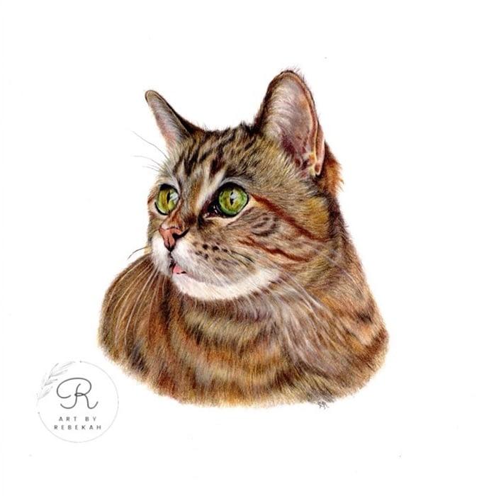 Cat portrait by pet portrait artist Rebekah Mushinski