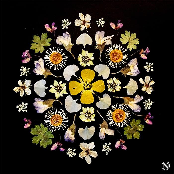 Natalie Luz flower mandala