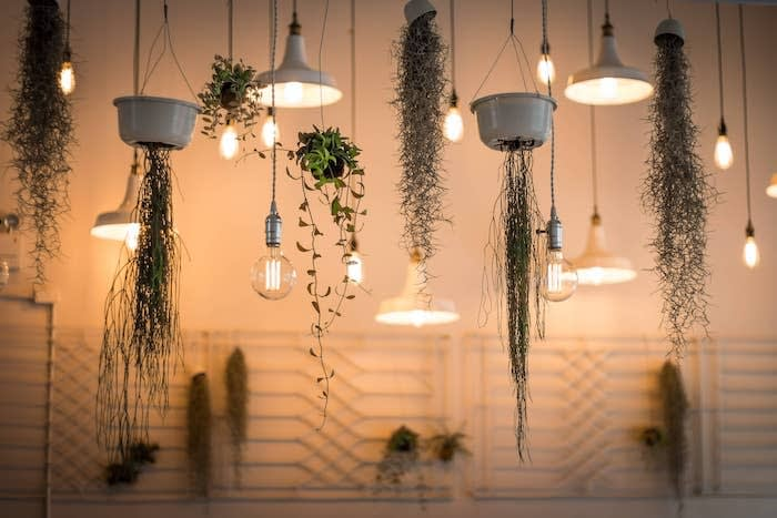 Ceiling lights and plants